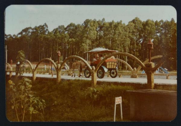 Resultado de imagem para parque oasis foto antiga